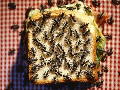 formiga_no_pao-107 Dicas para afastar as formigas Desinsetização Pragas