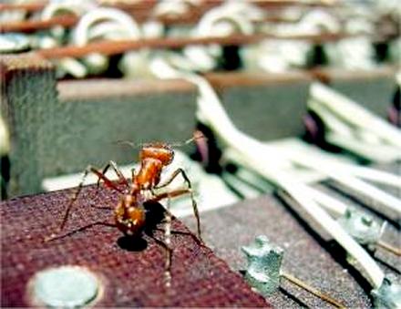 FormigaDigital Formigas podem estragar os aparelhos eletrônicos Dedetização Pragas