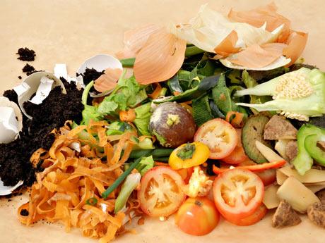 lixo-organico Lixo orgânico: cuidados e precauções  Prevenções