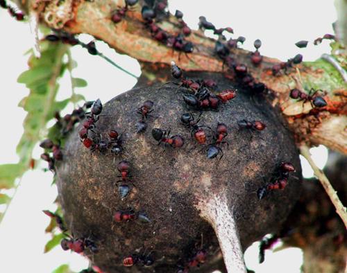O_mundo_das_formigas O mundo das formigas Curiosidades