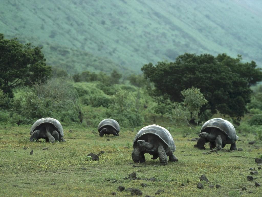 dedetizacao-insetan-1024x768 Ratos infestam arquipélago de Galápagos Desratização