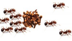 Como_espantar_as_formigas_de_nosso_ambiente-300x171 Como_espantar_as_formigas_de_nosso_ambiente