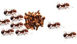 Como_espantar_as_formigas_de_nosso_ambiente-300x172 Como_espantar_as_formigas_de_nosso_ambiente