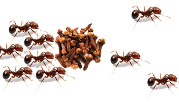 "Como_espantar_as_formigas_de_nosso_ambiente Como ""espantar"" as formigas de nosso ambiente? Dedetização"