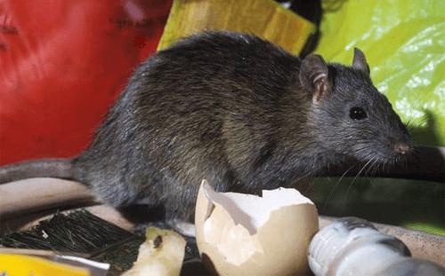 22/10 - Moradora do Dona Diva reclama de lote vago provocando infestação de ratos