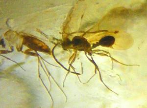 achado_fosseis_insetos_pragas-300x221 achado_fosseis_insetos_pragas