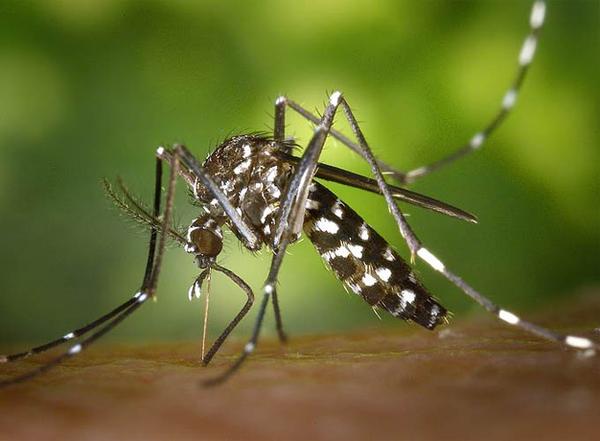 redes_sociais_combate_dengue Casos de dengue continuam a subir em Minas Notícias Prevenções
