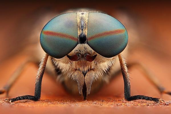 insetos-e-pragas-com-uma-lente-macro Insetos estranhos Curiosidades