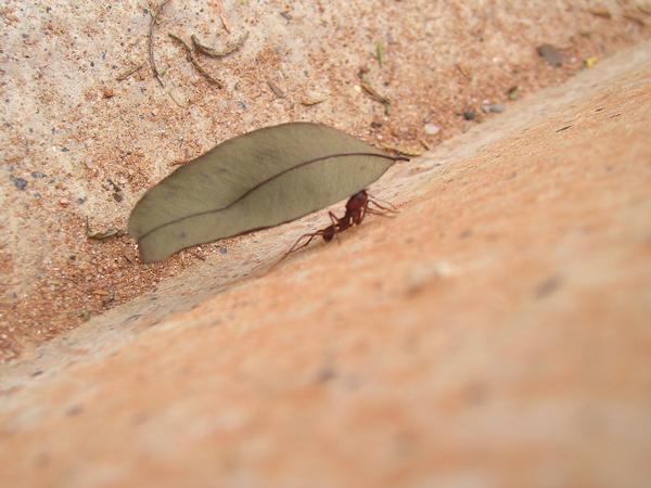 formigas-sao-um-perigo-a-saude-publica Formigas: um perigo à saúde pública Desinsetização