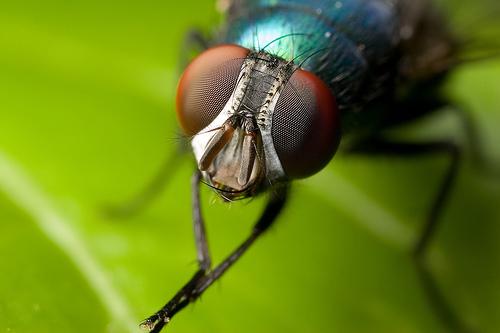 combater-moscas Como controlar as moscas Prevenções