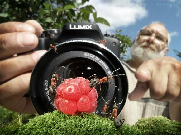 formigas-Andrey-Pavlov Veja imagens impressionantes de formigas Curiosidades