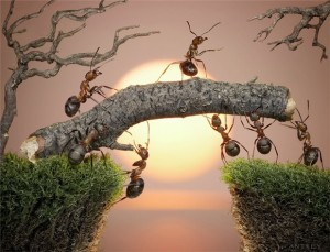 formigas-Andrey-Pavlov1-300x229 formigas Andrey Pavlov
