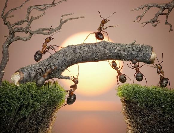 formigas-Andrey-Pavlov1 Veja imagens impressionantes de formigas Curiosidades