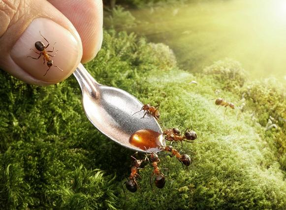 formigas-Andrey-Pavlov2 Veja imagens impressionantes de formigas Curiosidades