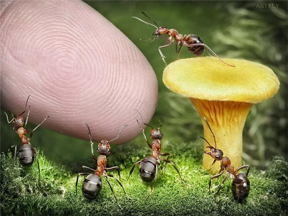 formigas-Andrey-Pavlov3 Veja imagens impressionantes de formigas Curiosidades