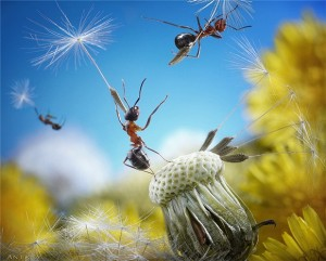 formigas-Andrey-Pavlov4-300x241 formigas Andrey Pavlov