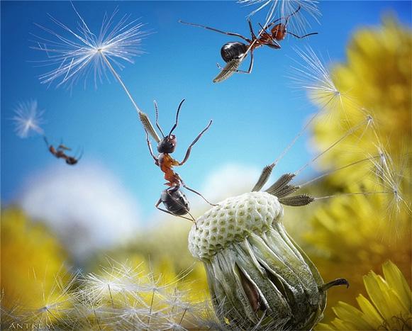 formigas-Andrey-Pavlov4 Veja imagens impressionantes de formigas Curiosidades