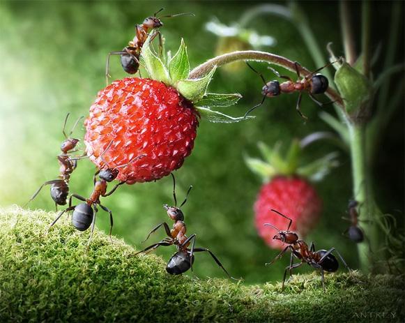 formigas-Andrey-Pavlov5 Veja imagens impressionantes de formigas Curiosidades