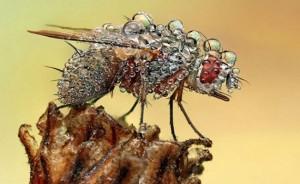 chuva-inseto-300x184 insetos sobrevivem à chuva