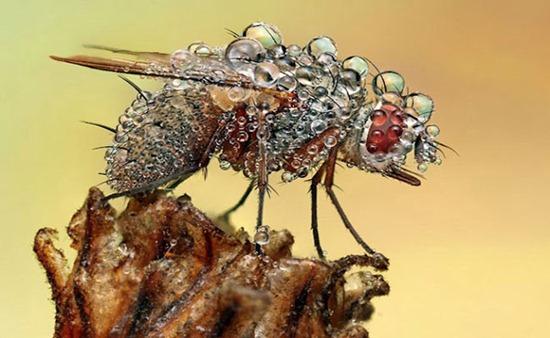 chuva-inseto Você sabe como os insetos sobrevivem à chuva? Curiosidades