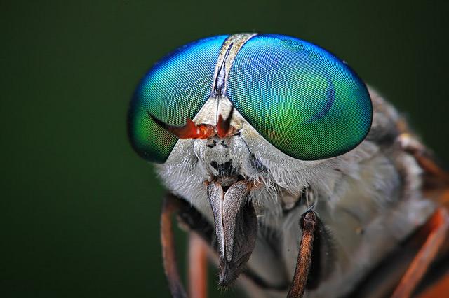 fotografia-Shikhei-Goh-inseto De olho nos insetos com o fotógrafo Shikhei Goh Curiosidades