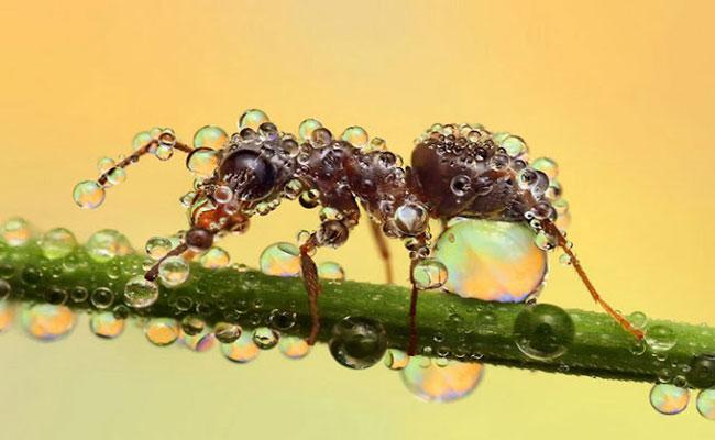 inseto-chuva Você sabe como os insetos sobrevivem à chuva? Curiosidades