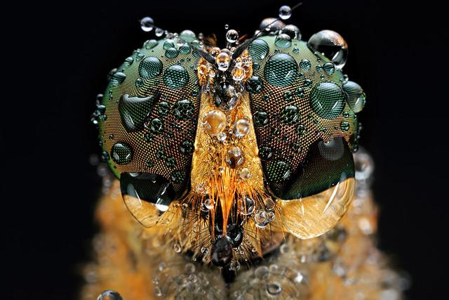 inseto-fotografia-Shikhei-Goh De olho nos insetos com o fotógrafo Shikhei Goh Curiosidades