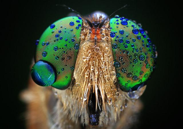 inseto-fotografo-Shikhei-Goh De olho nos insetos com o fotógrafo Shikhei Goh Curiosidades