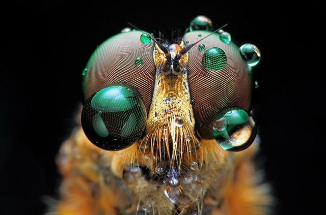 olhos-inseto-fotografia-Shikhei-Goh De olho nos insetos com o fotógrafo Shikhei Goh Curiosidades