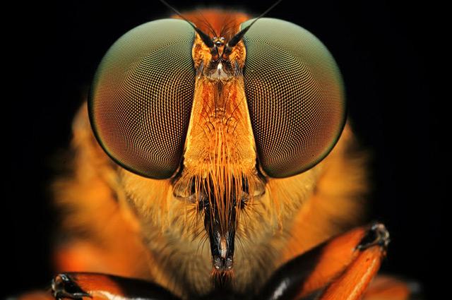 olhos-inseto-fotografo-Shikhei-Goh De olho nos insetos com o fotógrafo Shikhei Goh Curiosidades