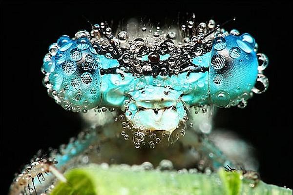 inseto-orvalho-1-insetan Fotografias de inseto por Miroslaw Swietek Curiosidades
