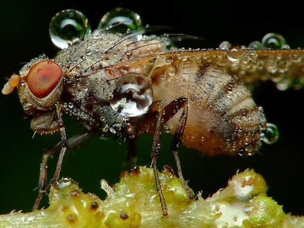 inseto-orvalho-2-insetan1 Fotografias de inseto por Miroslaw Swietek Curiosidades