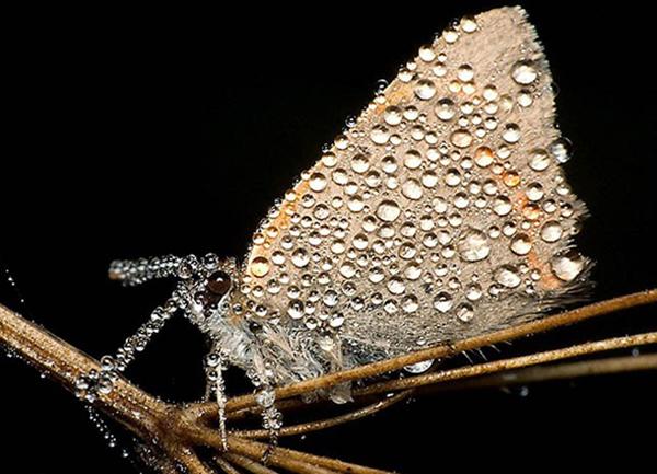 inseto-orvalho-3-insetan Fotografias de inseto por Miroslaw Swietek Curiosidades