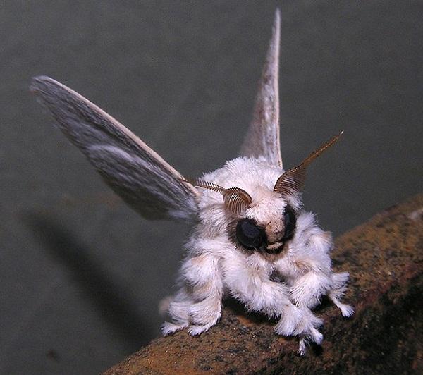 mariposa-poodle Cientista conta como fez foto de 'mariposa-poodle' na Venezuela Notícias