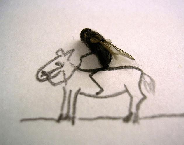08 Arte com moscas Papo de Praga