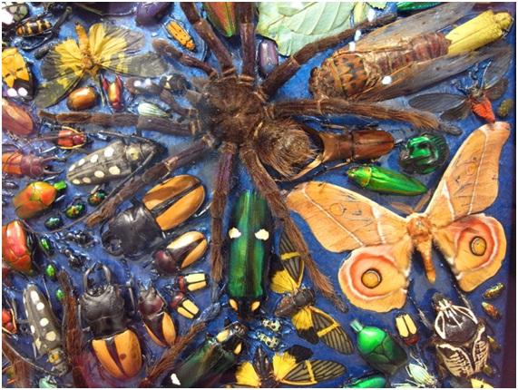 mandala Artista polêmico cria mandalas com centenas de insetos mortos Papo de Praga