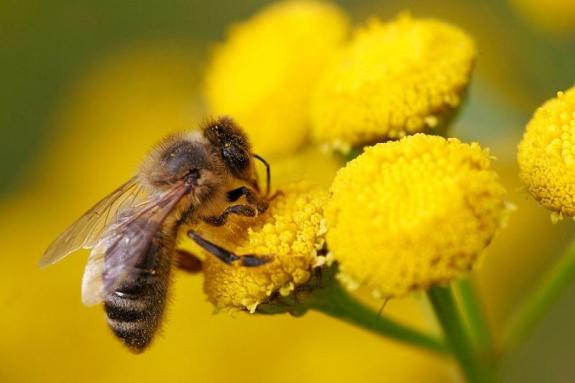 image Declínio de insetos polinizadores ameaça lavouras em todo o mundo Curiosidades Notícias