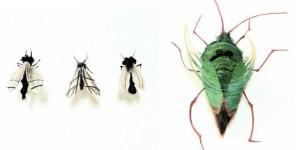 insetos_de_cabelo2-300x150 insetos_de_cabelo2