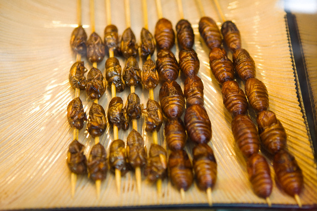 Fried Crickets and Larva