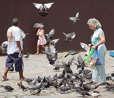 pombos Superpopulação de pombos é problema de saúde pública Notícias