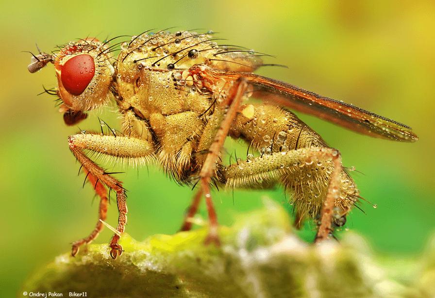 insetos_by_ondrej_pakan A arte de fotografar insetos Papo de Praga