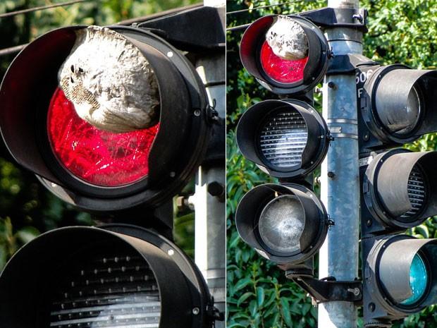 insetos_tomam_semaforo Insetos ocupam semáforo na região central de São Paulo Curiosidades