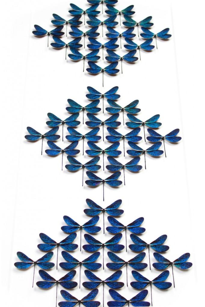 libelulas-682x1024 Arte com pragas Papo de Praga