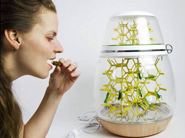 maquina_criar_insetos_2 Insetos na comida? Pode! Notícias