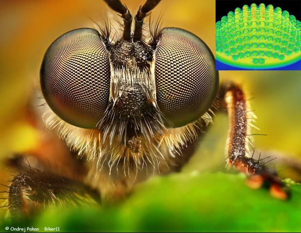 camera_olho_insetos Inspirados nos olhos dos insetos cientistas criam câmera digital Papo de Praga