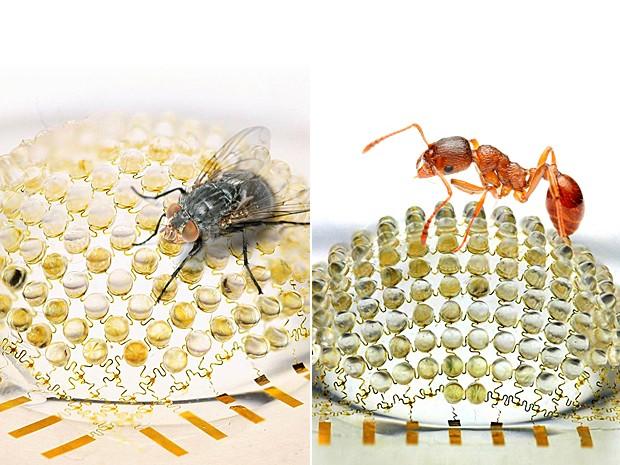 camera_olhos_insetos Inspirados nos olhos dos insetos cientistas criam câmera digital Papo de Praga