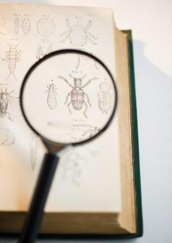 insetos_lupa 03 de setembro: Dia do Biólogo Curiosidades Notícias