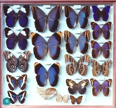 museu_entomologico_seara Brasil abriga maior museu de insetos da América Latina Papo de Praga