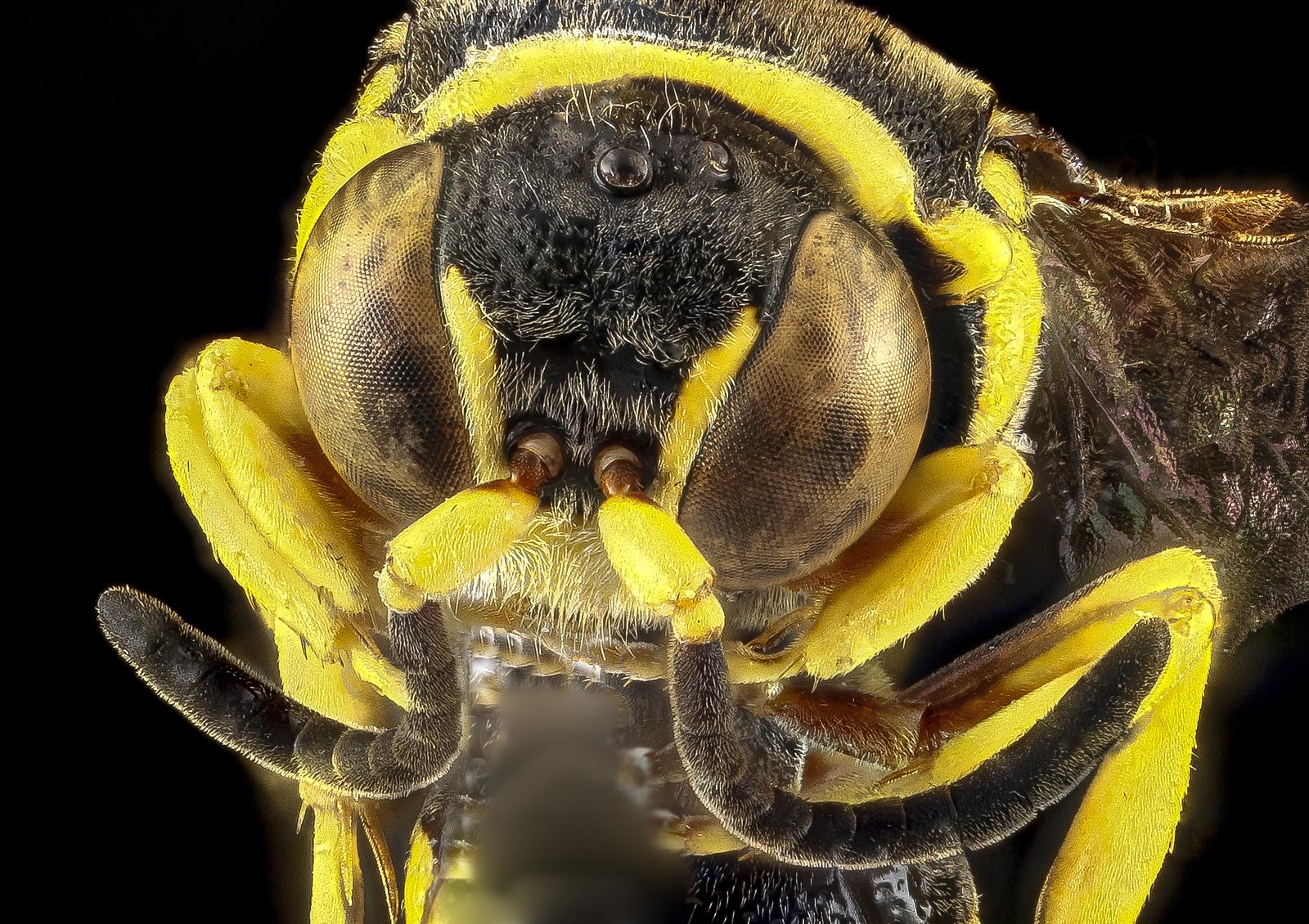 abelha_macrofoto Os detalhes coloridos dos insetos Fotografia Papo de Praga