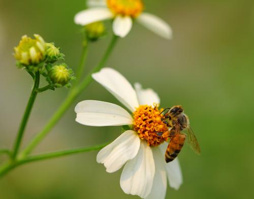 abelha_shutterstock Aplicativo criado por brasileiros vai monitorar sumiço de abelhas Papo de Praga